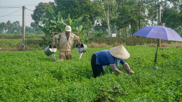 Nông dân vác bảo bối ra đồng để chống chọi nắng nóng 40 độ C - 5