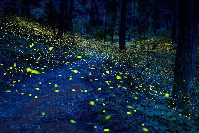 Những điểm đến có thiên nhiên tuyệt đẹp về đêm trên trái đất - 1