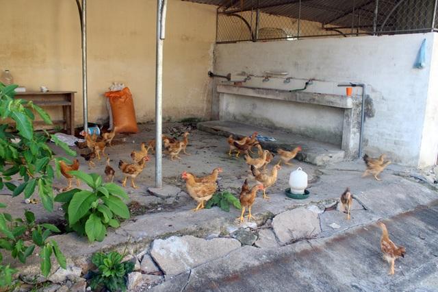 Xót xa trường học hơn 16 tỷ đồng chỉ làm nơi... phơi rơm, nuôi gà! - 12