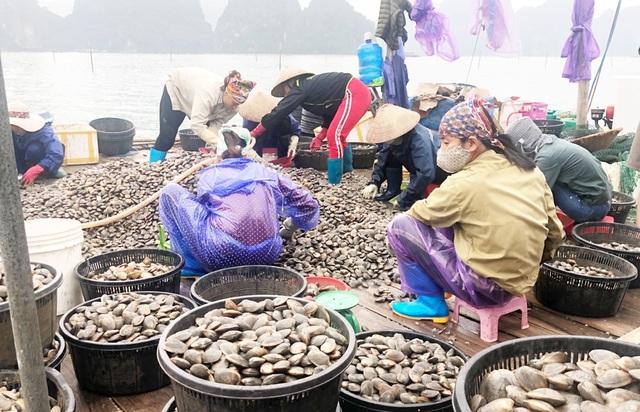 Quảng Ninh: Làm giàu từ nghề nuôi ngao giá - 1