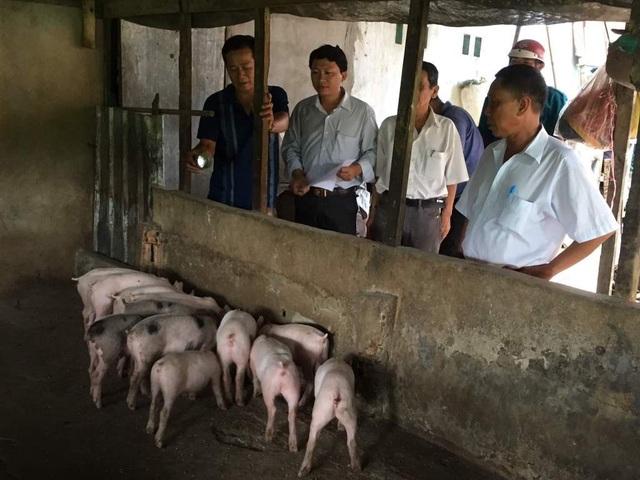 Thêm hai tỉnh ở miền Tây xuất hiện dịch tả lợn Châu Phi - 2
