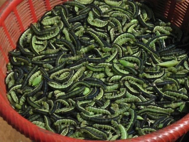Sởn da gà nếm thử 5 đặc sản từ sâu béo núc ở Việt Nam - 2