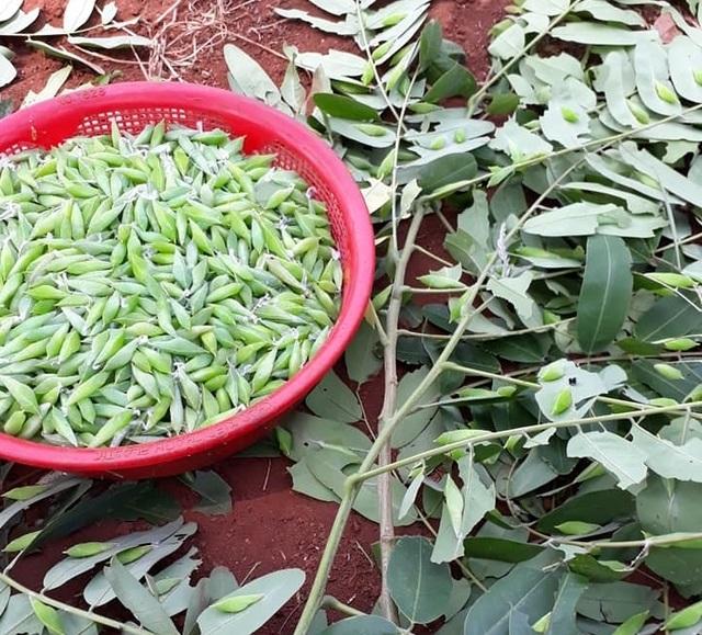 Sởn da gà nếm thử 5 đặc sản từ sâu béo núc ở Việt Nam - 1