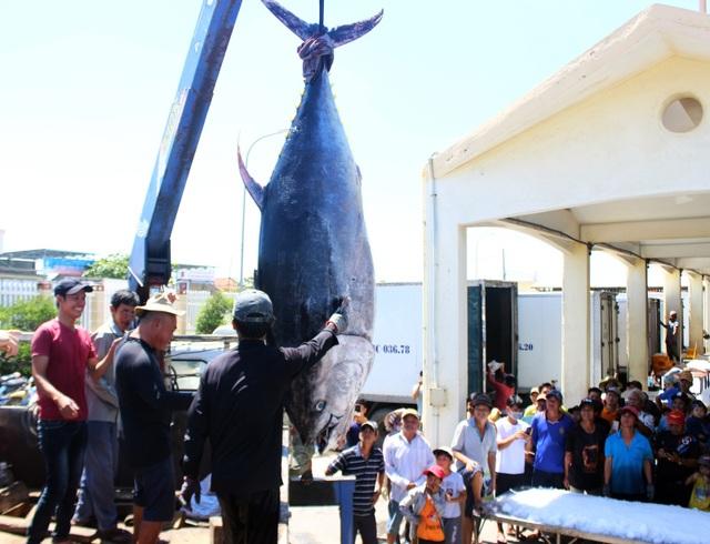 Phú Yên: Ngư dân thu hàng trăm triệu đồng từ cá ngừ đại dương - 6