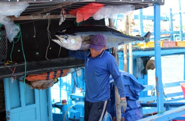 Phú Yên: Ngư dân thu hàng trăm triệu đồng từ cá ngừ đại dương - 4