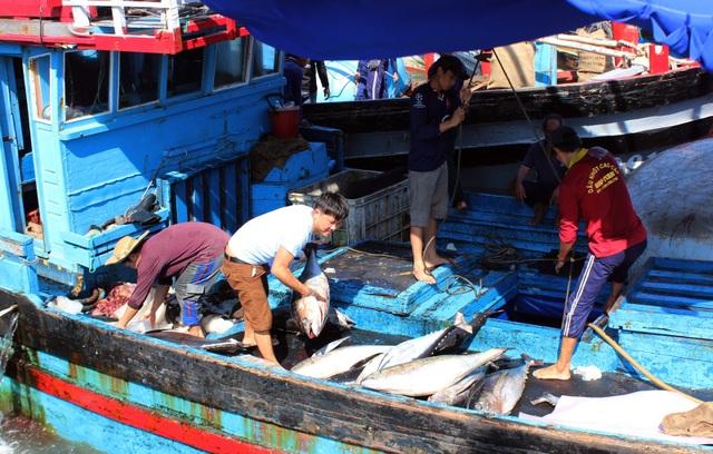 Phú Yên: Ngư dân thu hàng trăm triệu đồng từ cá ngừ đại dương - 1