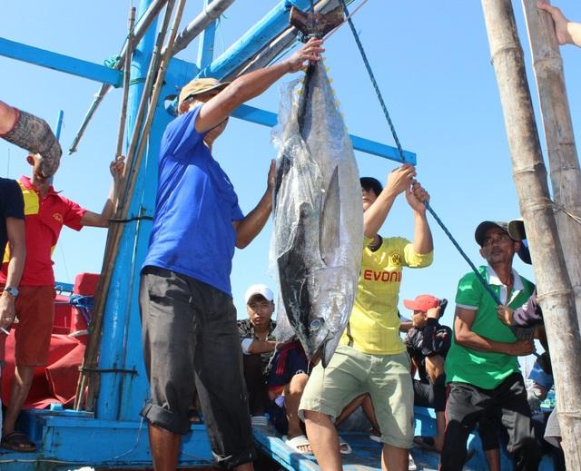 Phú Yên: Ngư dân thu hàng trăm triệu đồng từ cá ngừ đại dương - 3