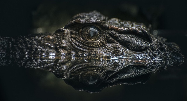 Bí ẩn xương cá sấu cổ đại được tìm thấy tại sa mạc cổ ở Israel - 1