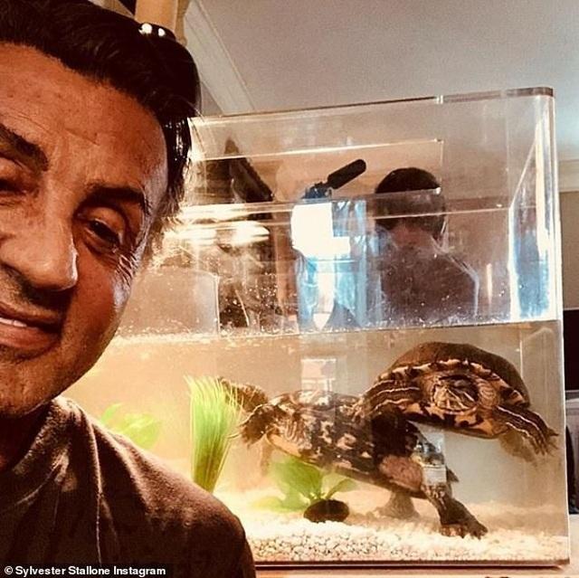 """Sylvester Stallone vẫn nuôi hai chú rùa trong phim """"Tay đấm huyền thoại"""" sau 40 năm - 2"""