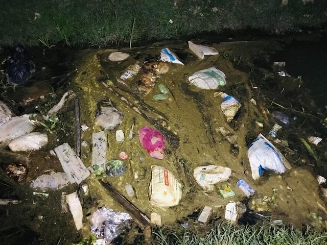 Phát hiện hàng chục con lợn chết trôi trên kênh dẫn nước - 2