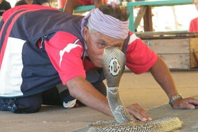 Bí ẩn ở ngôi làng kỳ lạ coi rắn độc như bầu bạn - 4