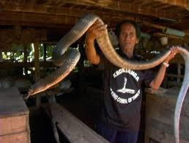 Bí ẩn ở ngôi làng kỳ lạ coi rắn độc như bầu bạn - 5