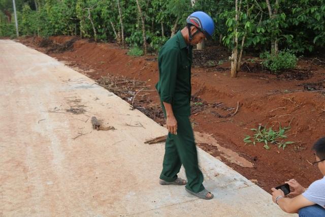 Đắk Nông: Đường chưa làm xong đã hỏng, dân nghi xi măng kém chất lượng - 2
