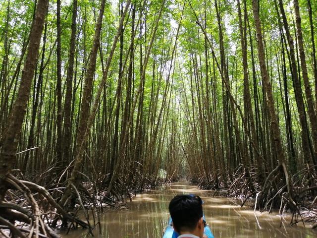 """Canô """"xẻ"""" nước, vỏ máy bồng bềnh xuyên rừng Mũi Cà Mau - 3"""
