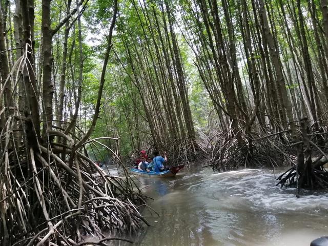 """Canô """"xẻ"""" nước, vỏ máy bồng bềnh xuyên rừng Mũi Cà Mau - 4"""