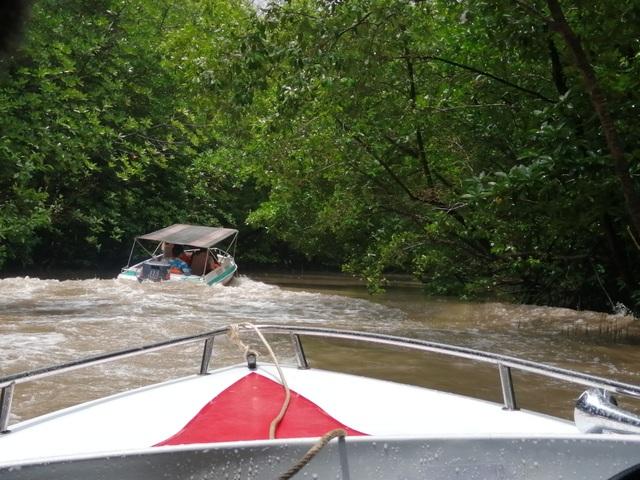 """Canô """"xẻ"""" nước, vỏ máy bồng bềnh xuyên rừng Mũi Cà Mau - 8"""