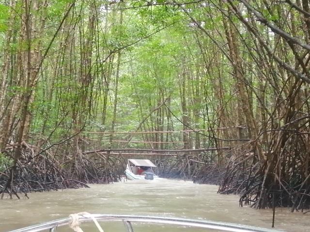 """Canô """"xẻ"""" nước, vỏ máy bồng bềnh xuyên rừng Mũi Cà Mau - 9"""