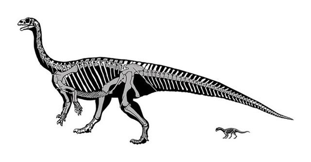 Loài khủng long kì lạ biết bò trước khi biết đi giống như con người - 1