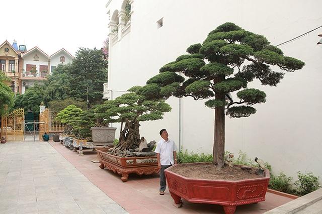 Vườn cây nghệ thuật di sản 300 tỷ đồng độc nhất vô nhị tại Việt Nam - 1