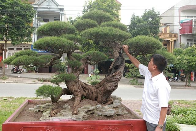 Vườn cây nghệ thuật di sản 300 tỷ đồng độc nhất vô nhị tại Việt Nam - 11