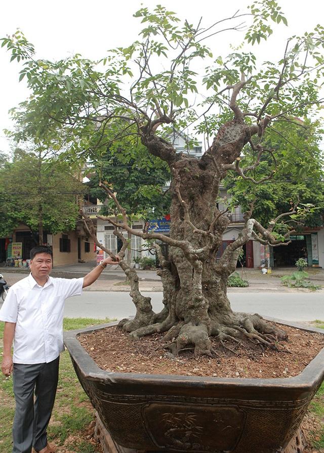 Vườn cây nghệ thuật di sản 300 tỷ đồng độc nhất vô nhị tại Việt Nam - 12