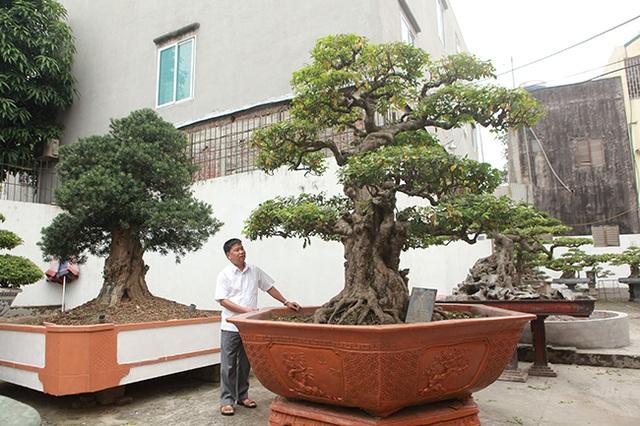 Vườn cây nghệ thuật di sản 300 tỷ đồng độc nhất vô nhị tại Việt Nam - 3