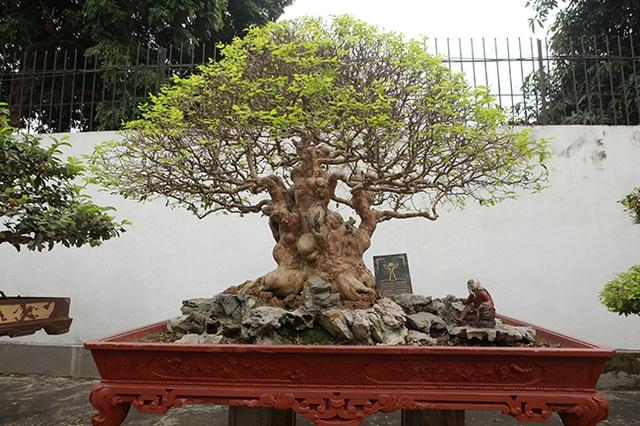 Vườn cây nghệ thuật di sản 300 tỷ đồng độc nhất vô nhị tại Việt Nam - 6