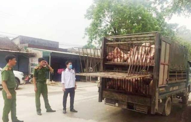 Bắt giữ xe chở 60 con lợn có biểu hiện ốm yếu từ vùng dịch tả lợn châu Phi - 1