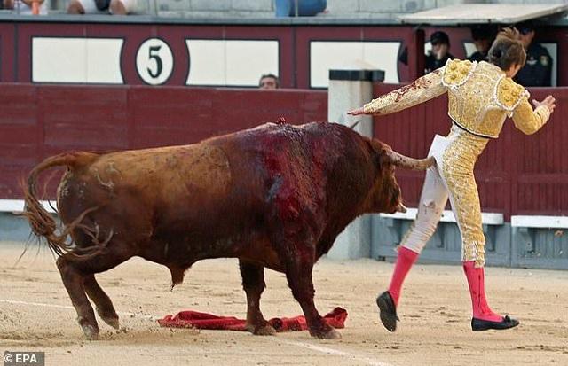 Võ sĩ đấu bò bị thương nặng sau cú húc nguy hiểm - 1