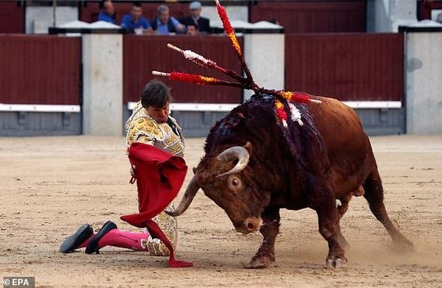 Võ sĩ đấu bò bị thương nặng sau cú húc nguy hiểm - 2