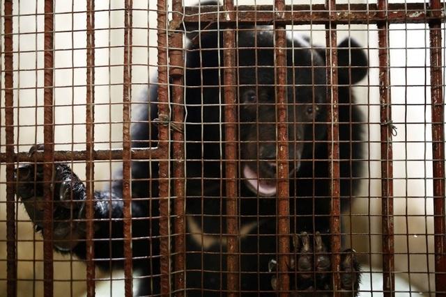 Apollo English trao tặng 120 triệu đồng giải cứu loài gấu - 2