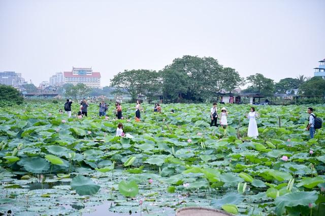 Thiếu nữ Hà Thành thả dáng bên đầm sen hồ Tây - 10