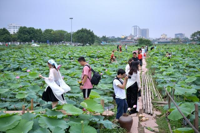 Thiếu nữ Hà Thành thả dáng bên đầm sen hồ Tây - 5