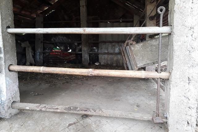 Hy hữu bò nhốt trong chuồng bị cắt trộm 2 đùi sau - 1