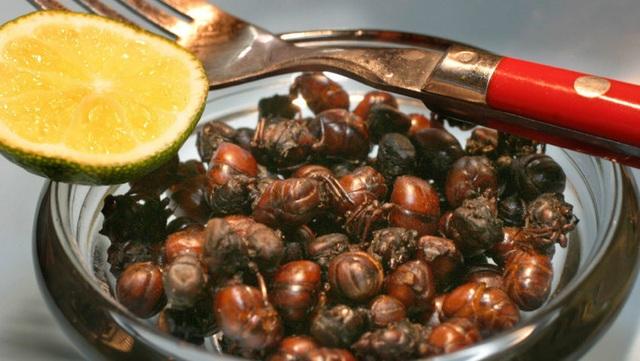 """Món kiến """"mông to"""", người dân nhai rôm rốp thay cơm - 4"""