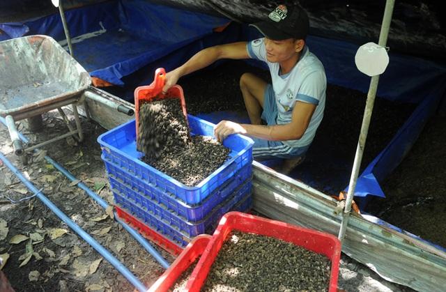 Kỹ sư bỏ việc về quê nuôi ruồi, thu nhập hàng chục triệu đồng mỗi tháng - 6