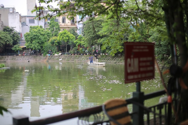 Hà Nội: Cá chết nổi trắng hồ Văn Chương, dân sống quanh hồ không dám... thở - 1