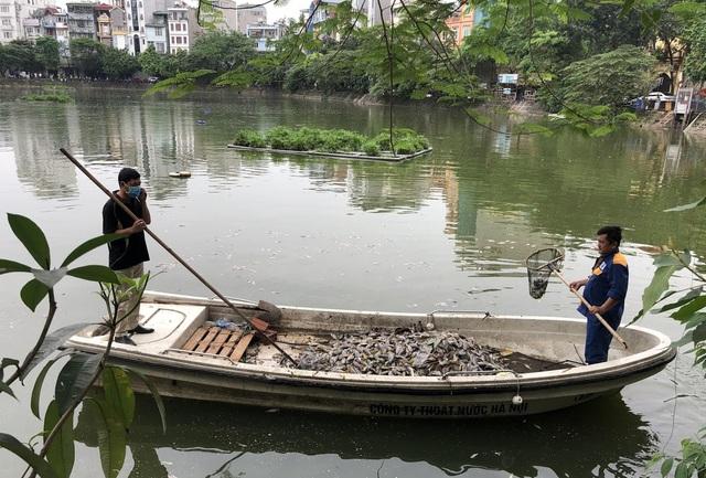 Hà Nội: Cá chết nổi trắng hồ Văn Chương, dân sống quanh hồ không dám... thở - 9