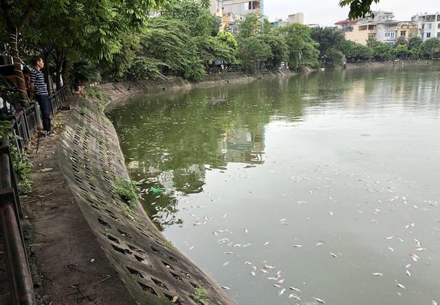 Hà Nội: Cá chết nổi trắng hồ Văn Chương, dân sống quanh hồ không dám... thở - 8