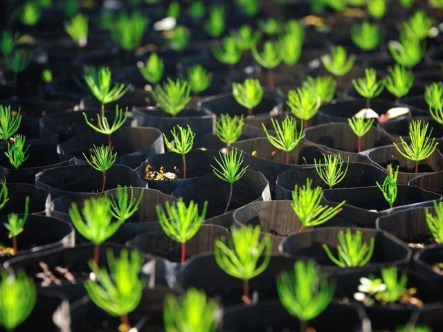 Philippines: Mỗi học sinh phải trồng 10 cây xanh mới được tốt nghiệp - 1