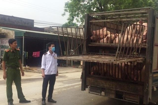 Hàng trăm con lợn có dấu hiệu lâm sàng của dịch tả lợn châu Phi được chở đi tiêu thụ - 5