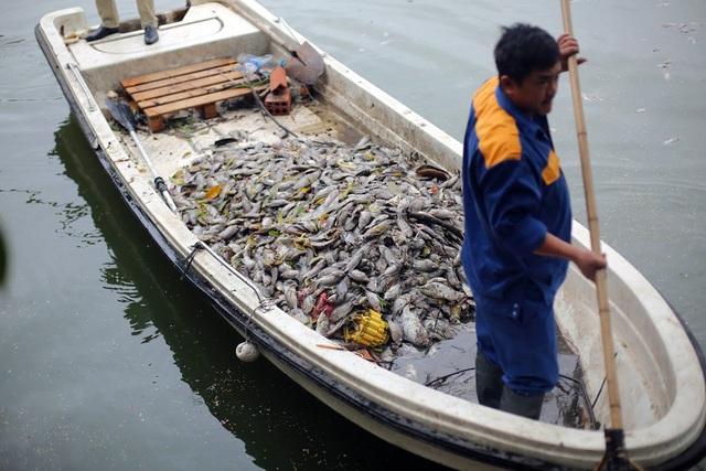 Hà Nội: Cá chết nổi trắng hồ Văn Chương, dân sống quanh hồ không dám... thở - 3