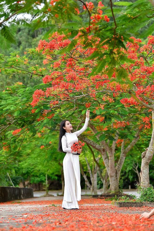 Cô gái xinh đẹp thả hồn trên con đường hoa phượng đỏ Hải Phòng - 3