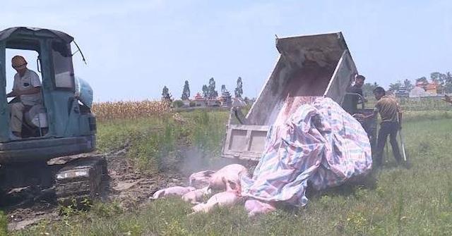 Thanh Hóa: Dân ngăn cản không cho tiêu hủy lợn dịch tả châu Phi ở trong thôn  - 2