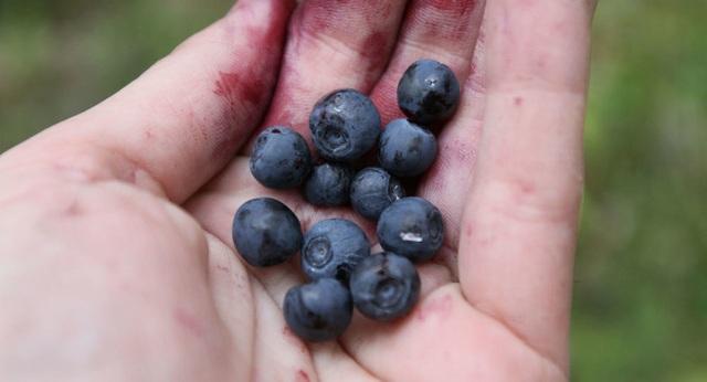 Ăn quả việt quất giúp giảm nguy cơ nhồi máu cơ tim - 1