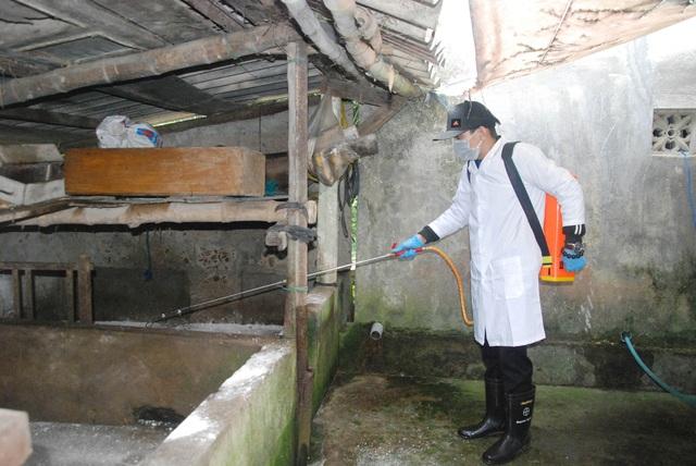 Quảng Trị tiêu hủy hàng trăm con lợn, Đắk Lắk xuất hiện thêm các ổ dịch mới - 1