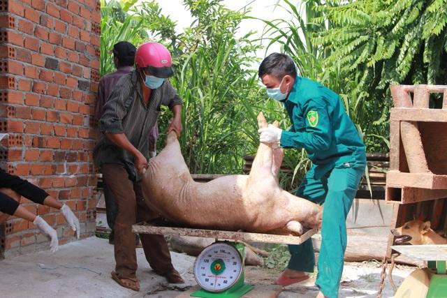 Dân phản ứng khi lợn nhiễm dịch tả châu Phi từ nơi khác mang về thôn tiêu hủy - 2