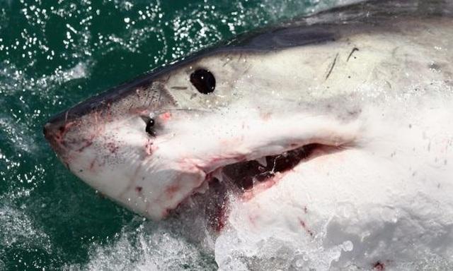 Mải mê bơi lội, cô gái bị cá mập bám sát sườn mà không hay biết - 2
