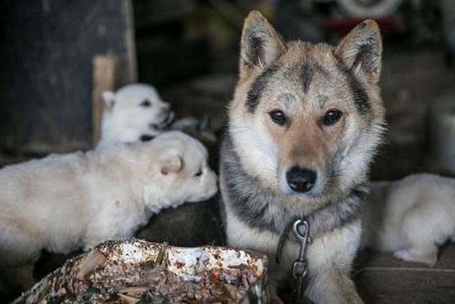 Chợ thịt chó nổi tiếng chính thức đóng cửa - 1