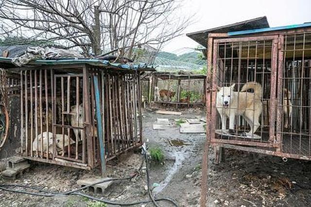 Chợ thịt chó nổi tiếng chính thức đóng cửa - 2